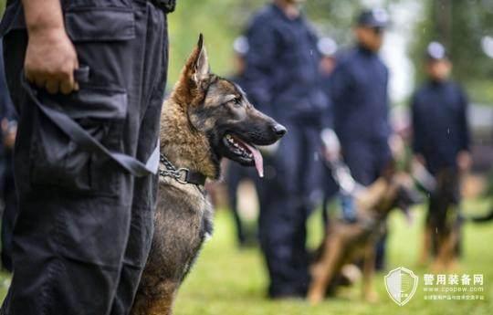 中国首只警用工作克隆犬入警